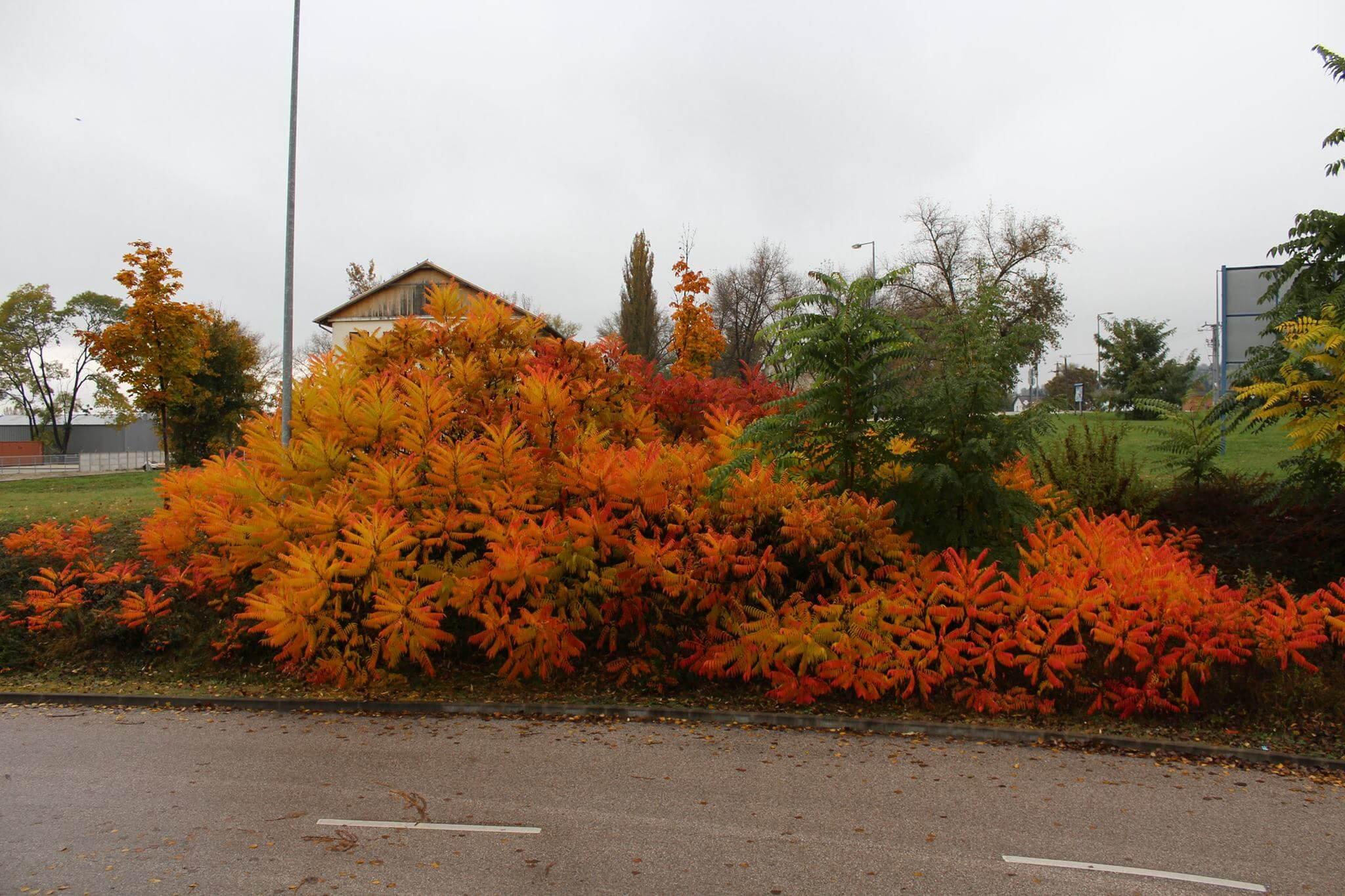 Őszi színekben a növények