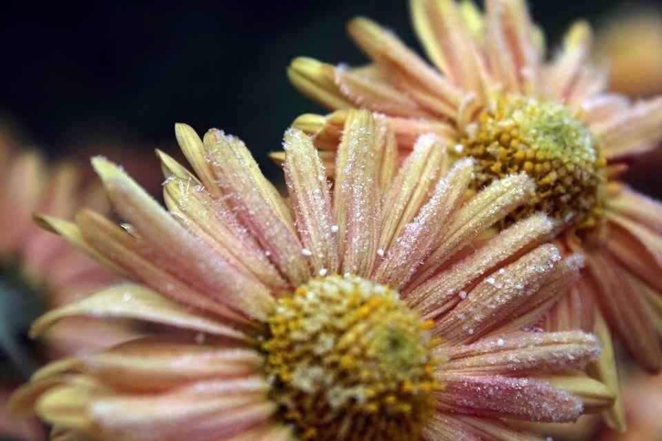 Novemberi zúzmara a virágokon
