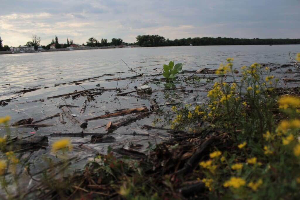 Sok hulladékot hozott az áradó Duna az esztergomi partra