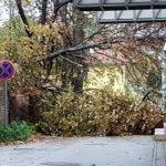Károkat okoz a szél Dorogon