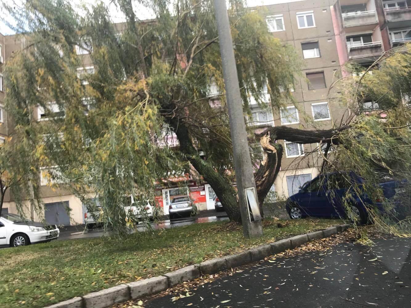 Autóra dőlt fa Dorogon