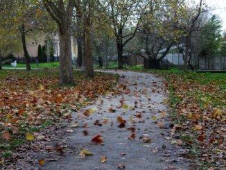 Fújja a szél a leveleket