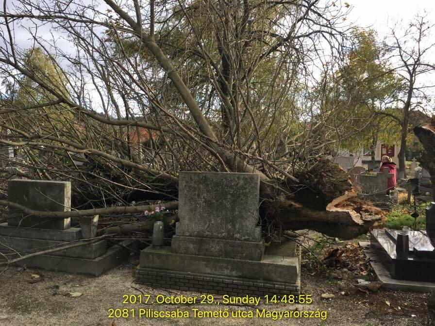 Piliscsabai temetőben fakidőlés