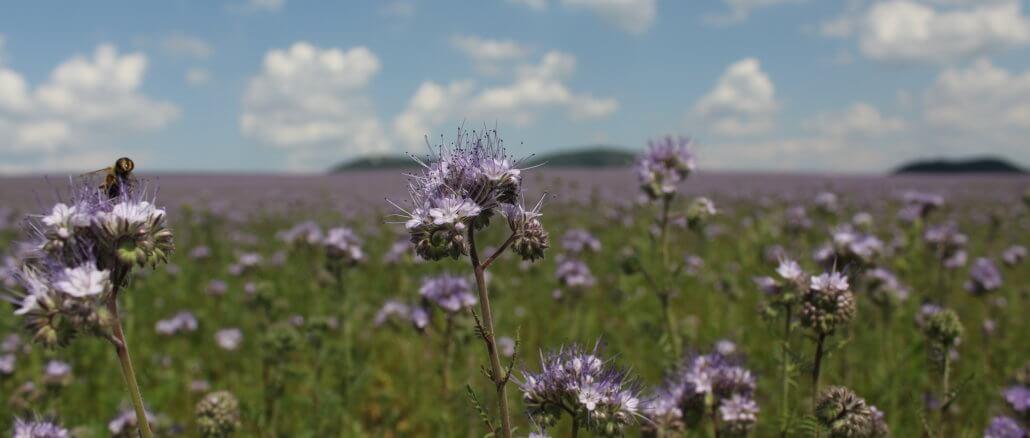 Mézontó virág